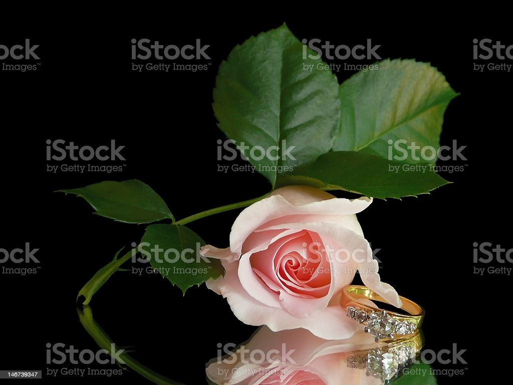 Love and Rose in Still Life royalty-free stock photo