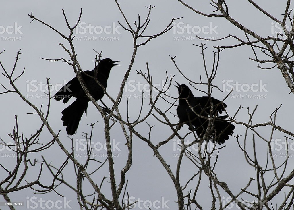 love birds on tree during winter royalty-free stock photo
