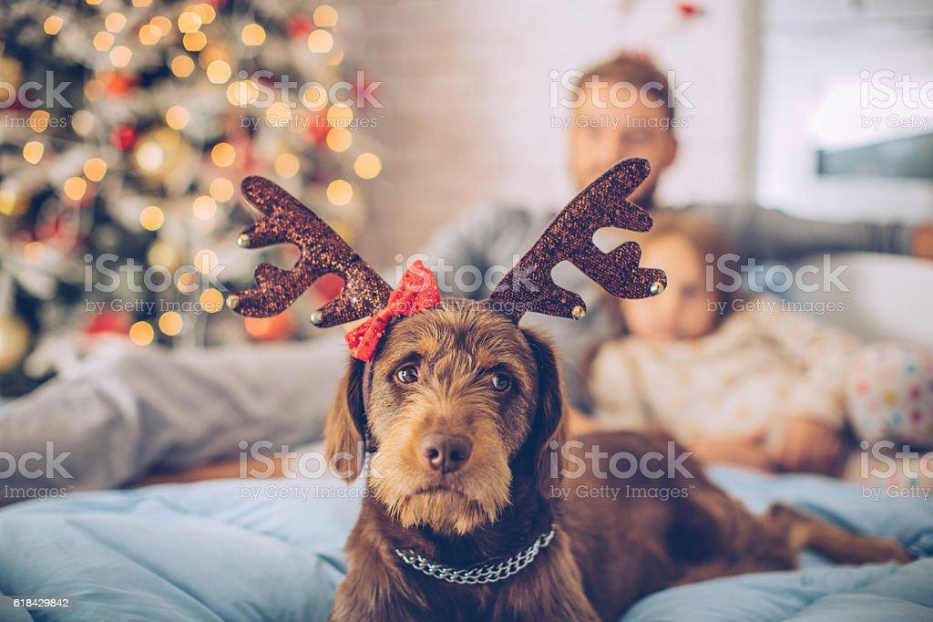 I love Christmas too! stock photo