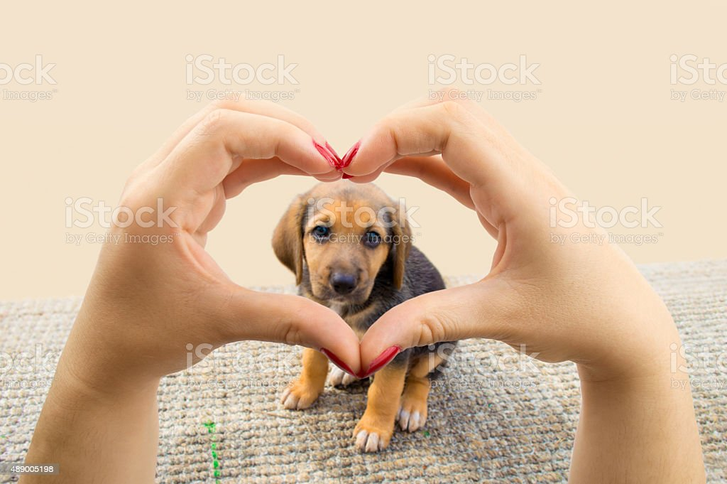 woman making the heart shape with her hands and the puppy dog in the...