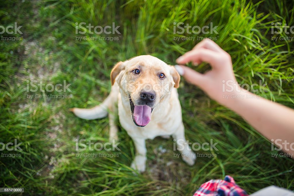 I love food! stock photo