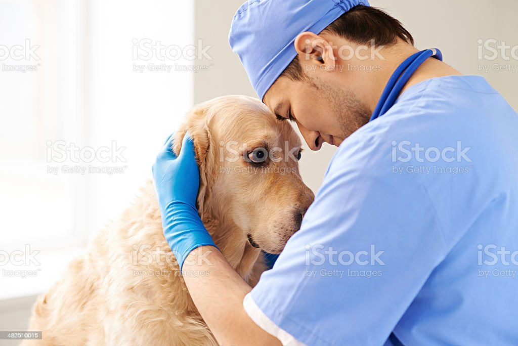 Love for dogs stock photo