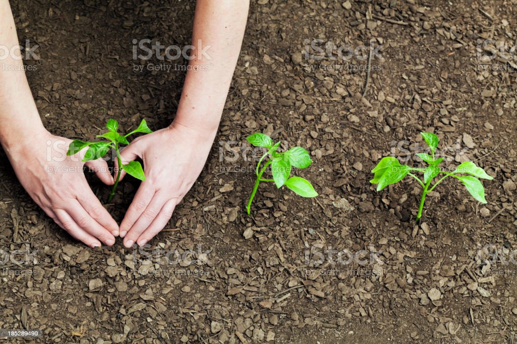 I love gardening stock photo