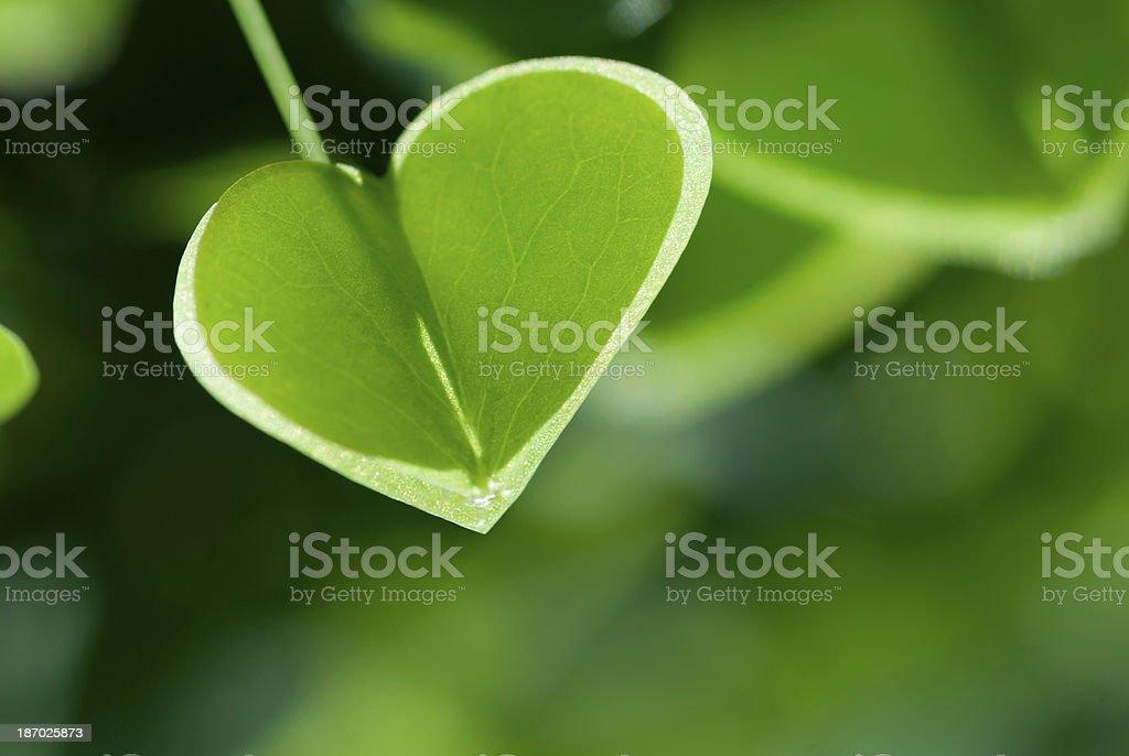 Love Gardening royalty-free stock photo