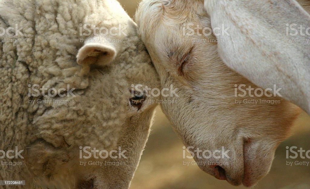 Love Has No Boundaries royalty-free stock photo