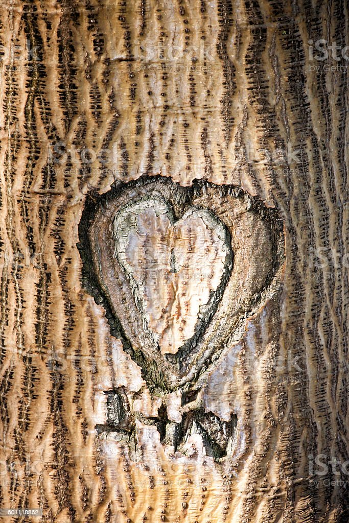 Love Heart Carved In Tree stock photo