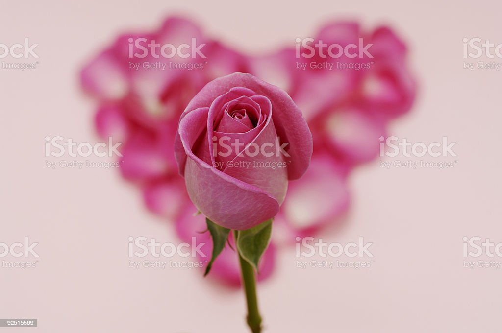 love heart of petals with pink rose bud royalty-free stock photo