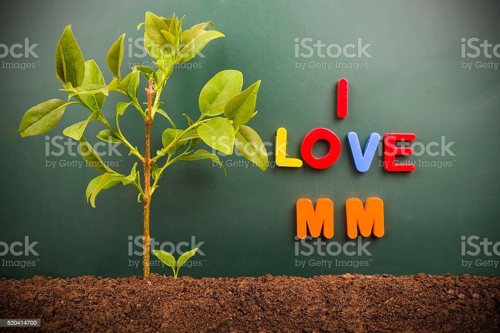 I love MM:bud and tree before blackboard stock photo