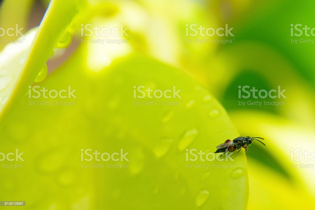 Love nature royalty-free stock photo