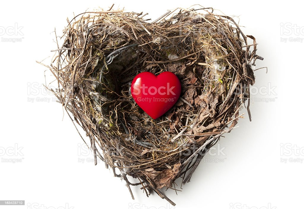 Love nest stock photo