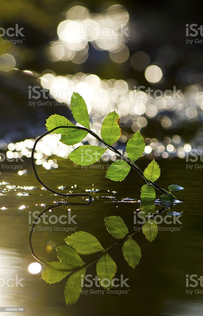 Love of Nature royalty-free stock photo