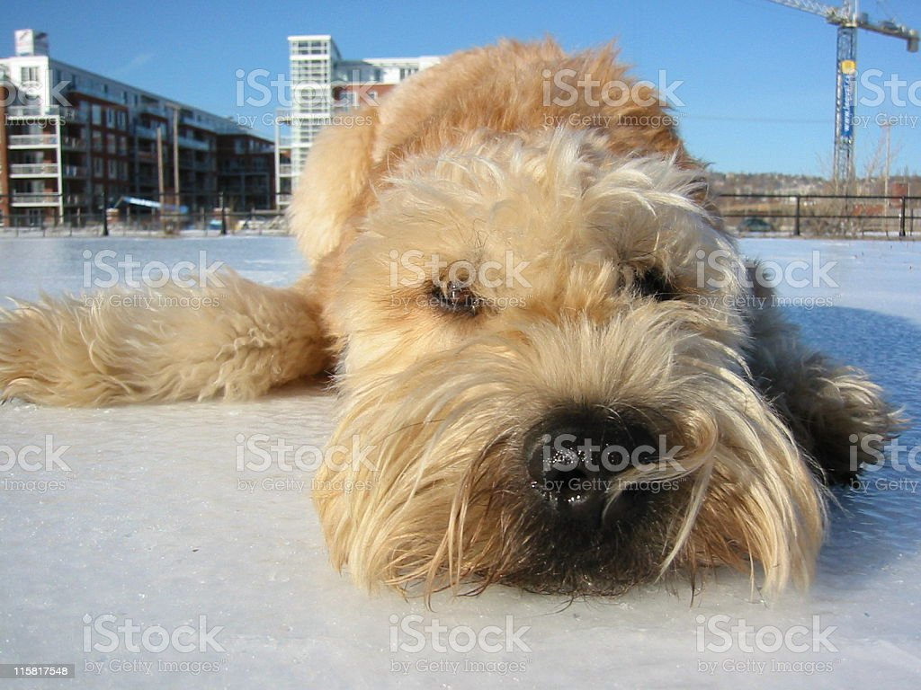 Love on Ice royalty-free stock photo