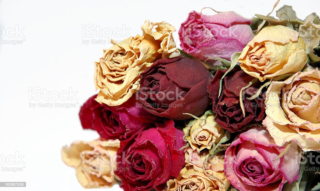 Love Thoughts royalty-free stock photo