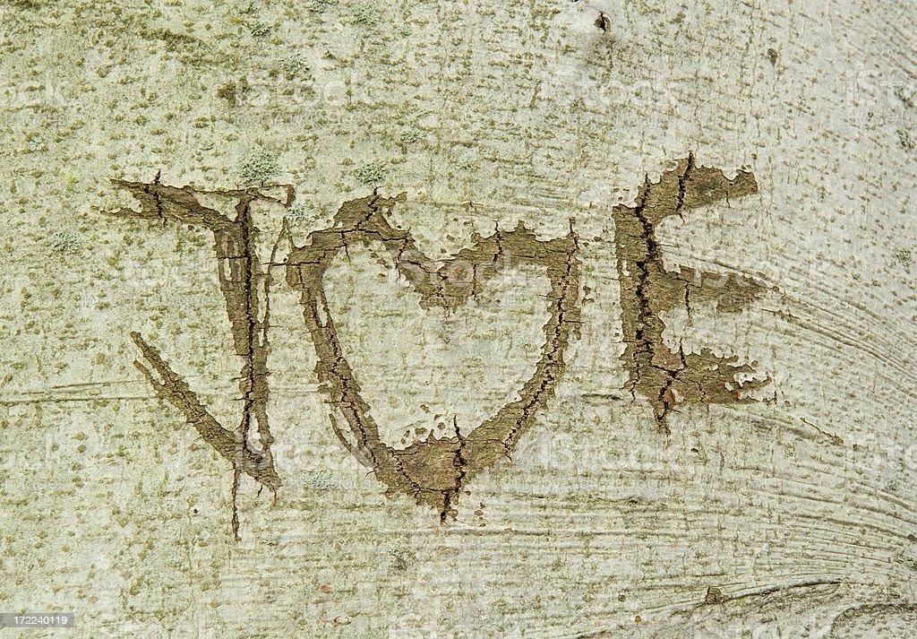 Love tree royalty-free stock photo