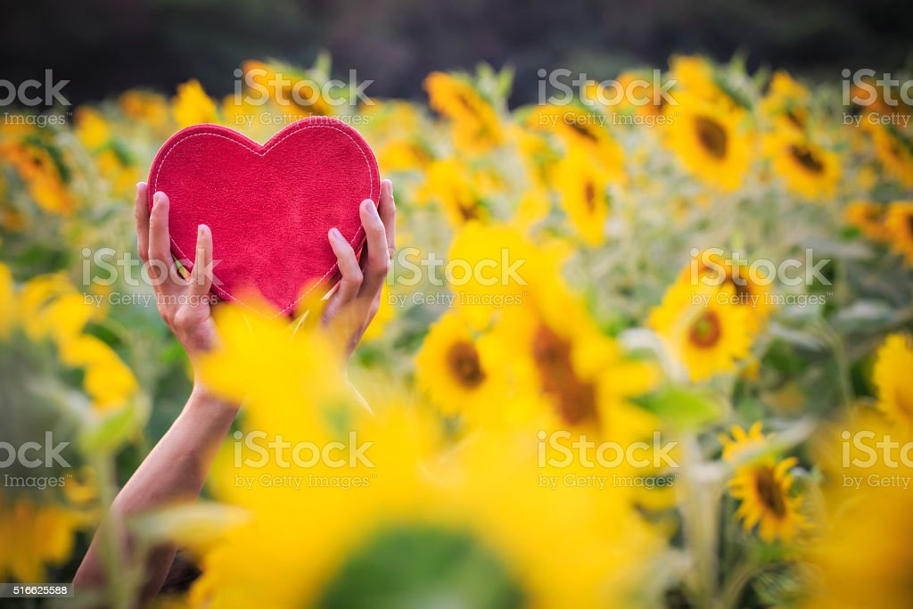 Love with sunflower stock photo