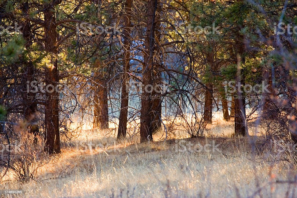 Lovell Gulch Hiking Trail stock photo