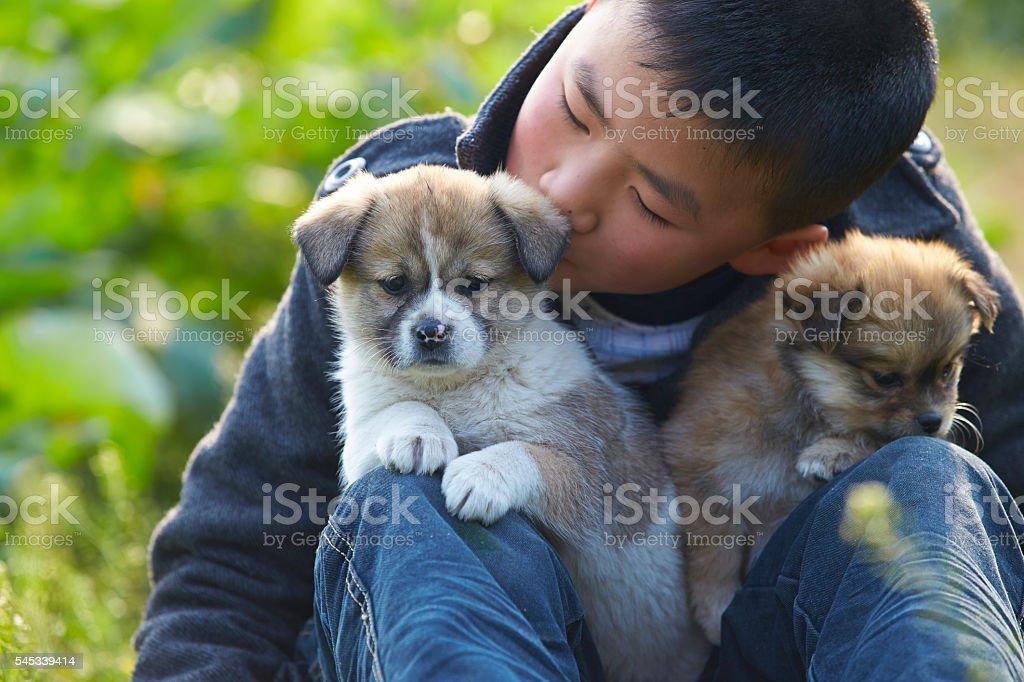 lovely asian boy playing with his puppy outdoor stock photo