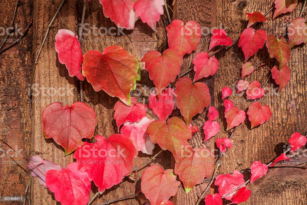 Lovely autumn leaves royalty-free stock photo