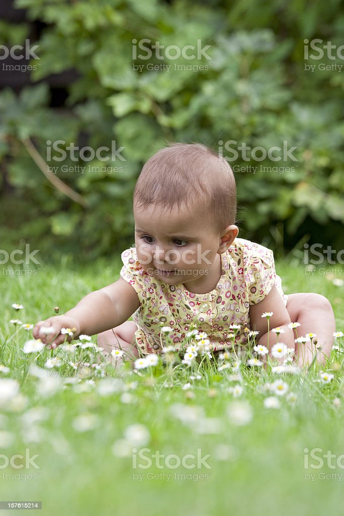 Lovely baby girl picking flowers in the grass royalty-free stock photo
