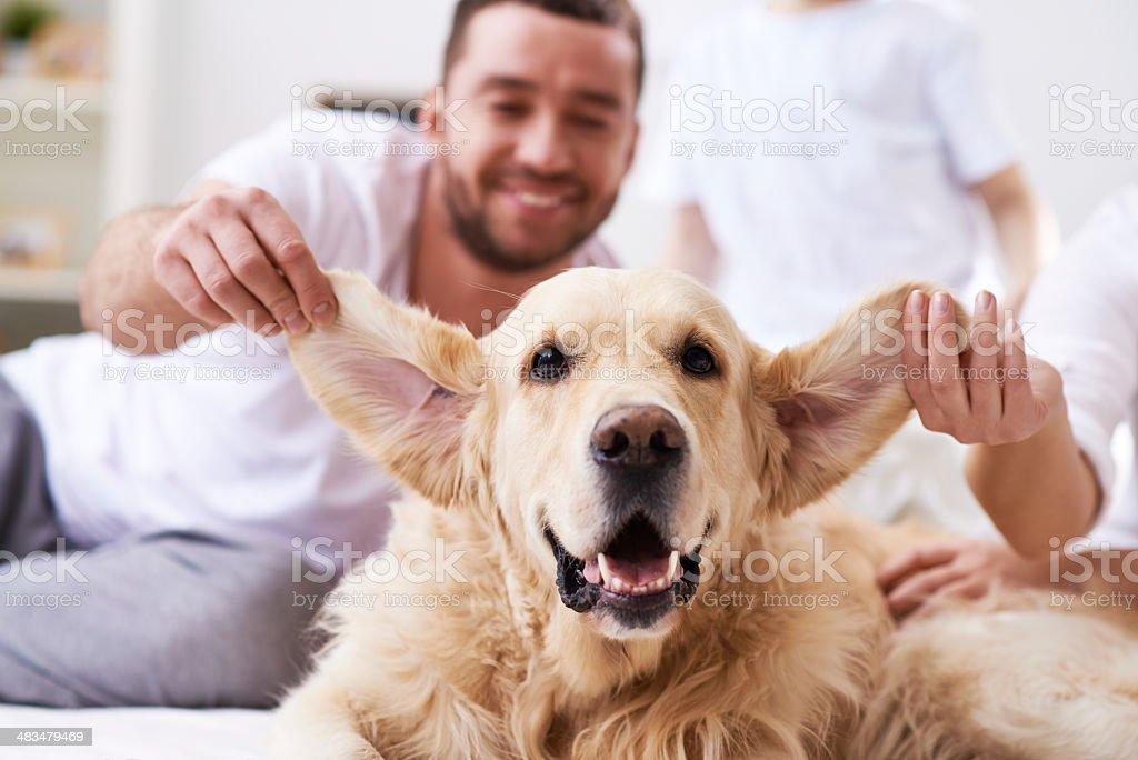 Lovely big-eared friend stock photo
