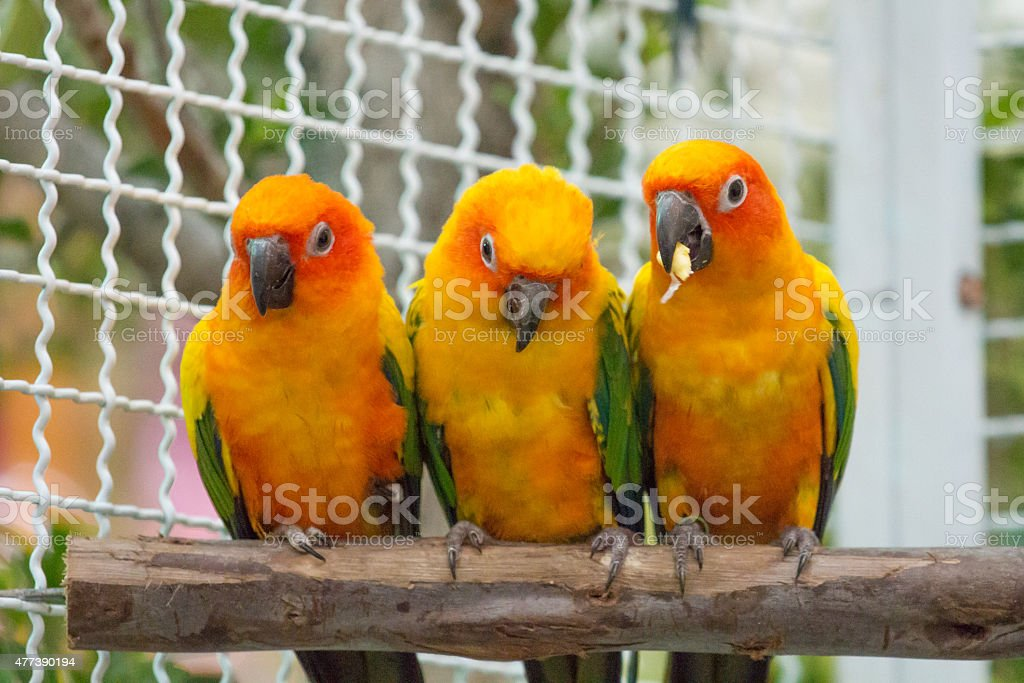 Lovely bird stock photo