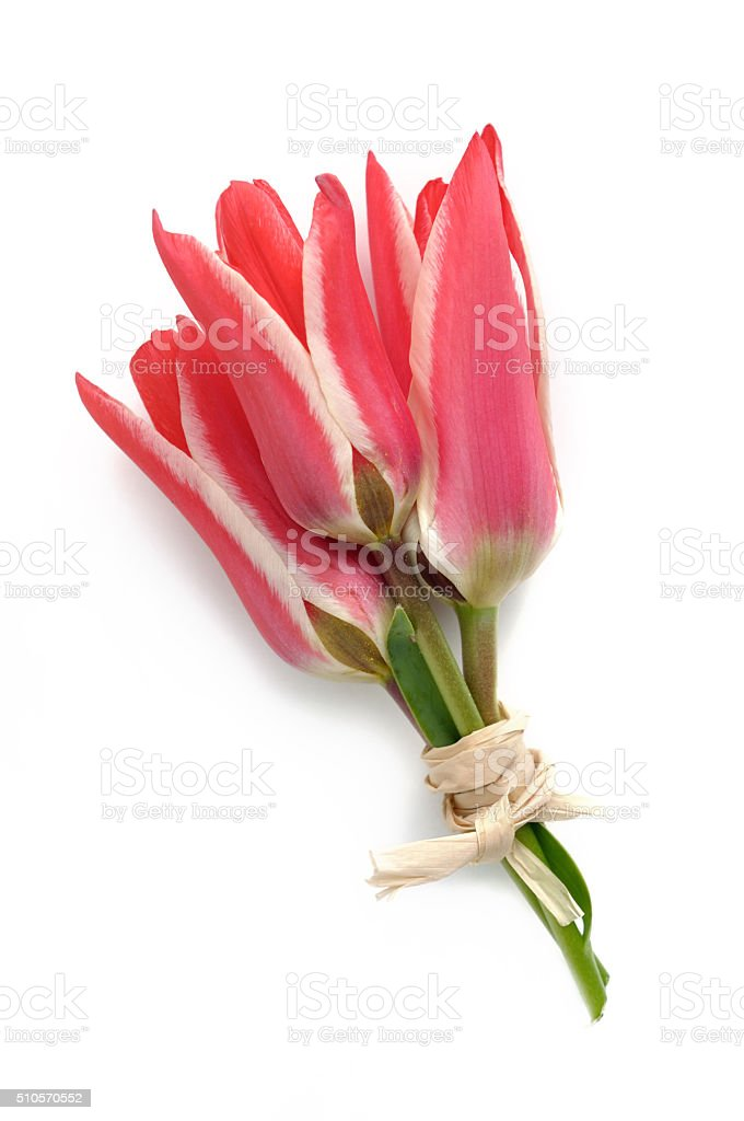 lovely bouquet of tulips stock photo