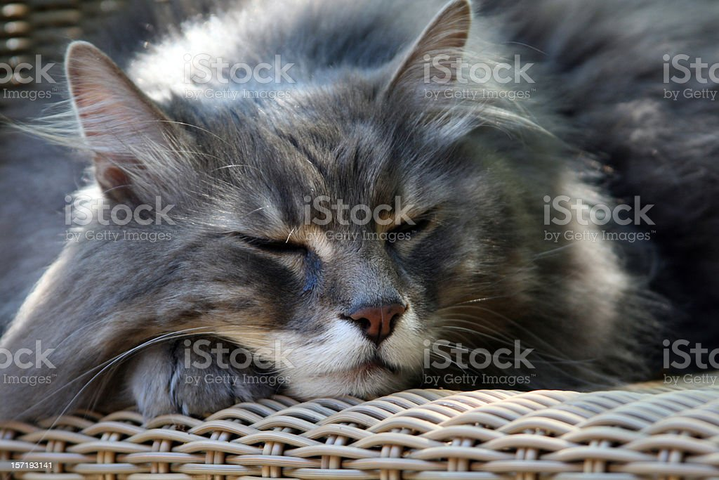 lovely cat royalty-free stock photo