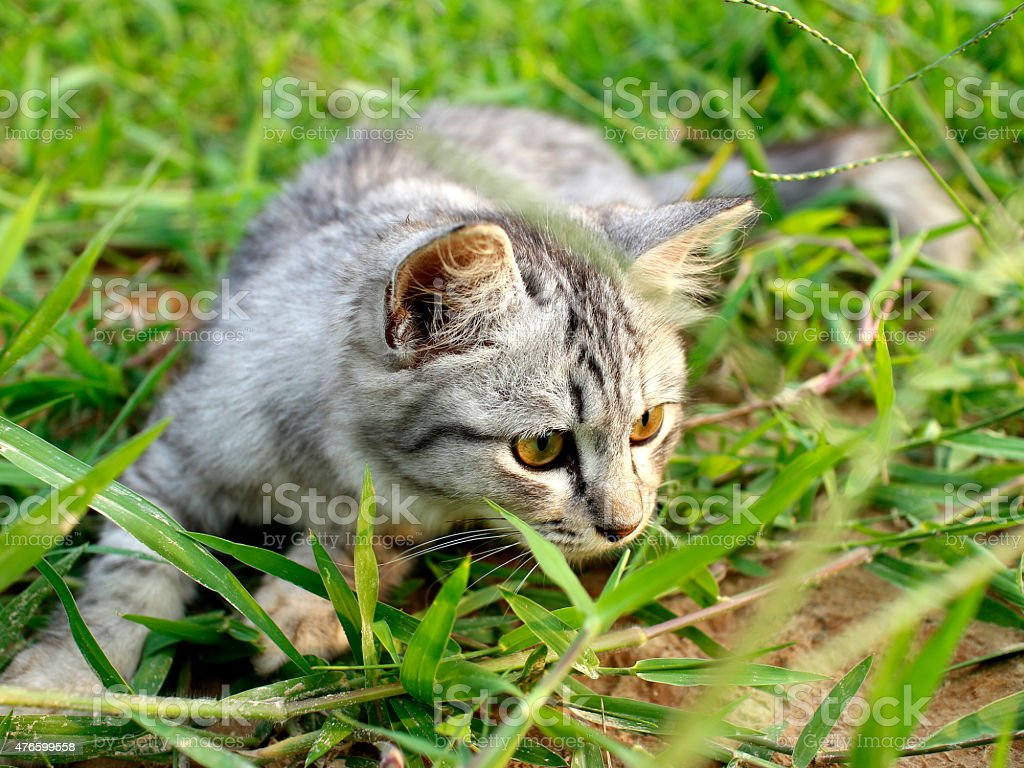 lovely cat play on green grass royalty-free stock photo