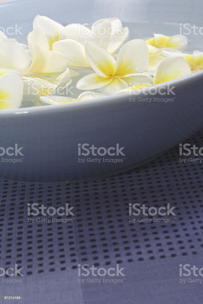 lovely frangipani royalty-free stock photo