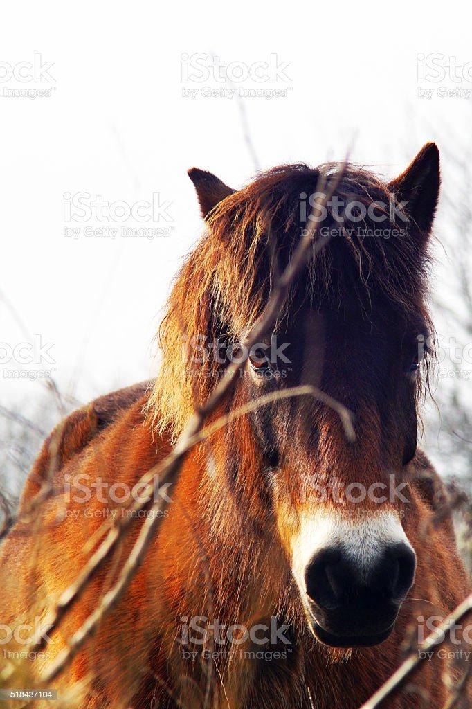 Lovely horse portrait closeup facing the camera stock photo