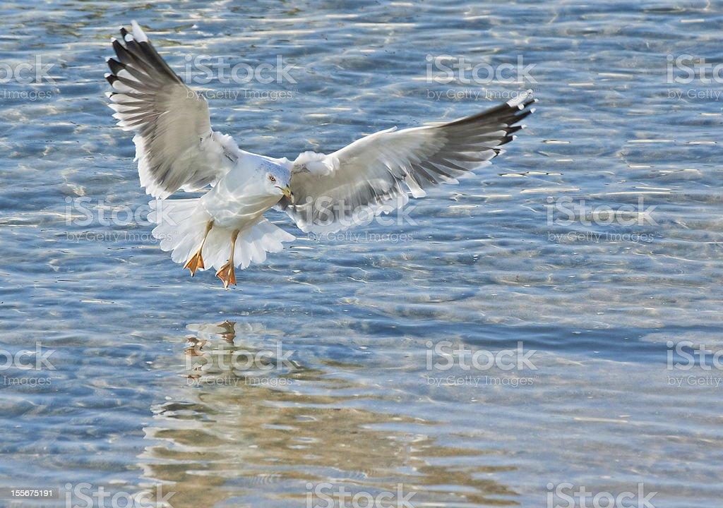 Piękny obraz odbicie w blue sea Gull zbiór zdjęć royalty-free