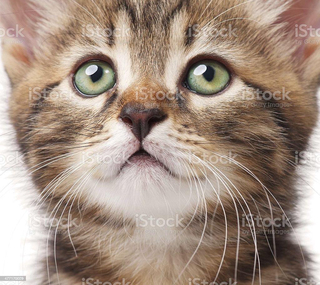 Lovely kitten stock photo