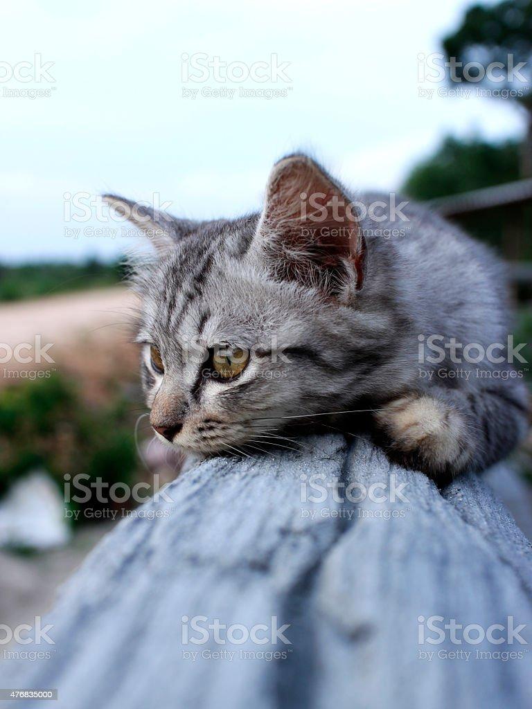lovely kitten will be sleeping royalty-free stock photo