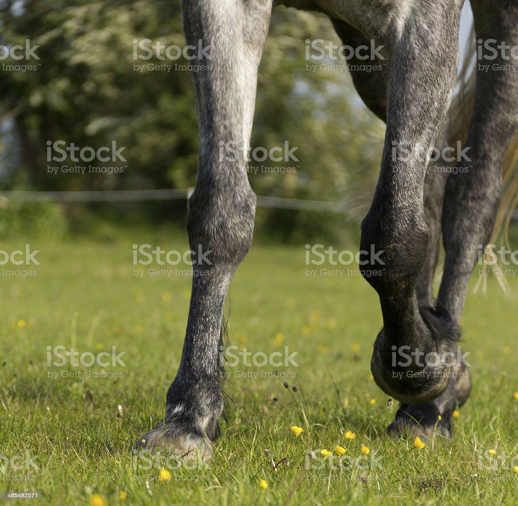 Lovely legs royalty-free stock photo