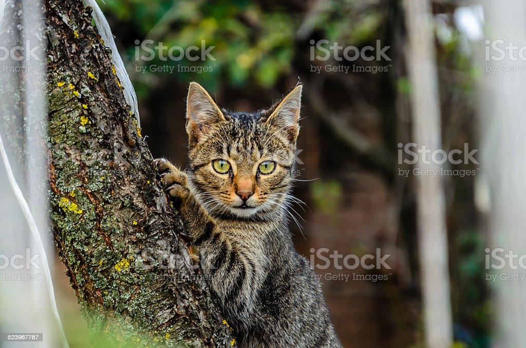 Adorable poco cat posando delante de la cámara foto de stock libre de derechos