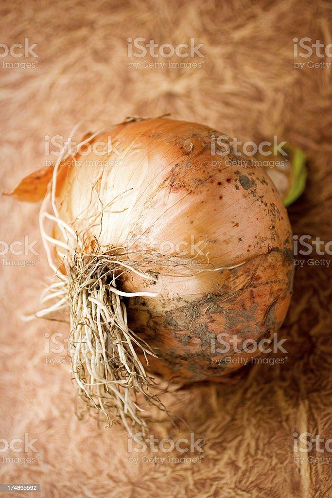 Lovely Onion royalty-free stock photo