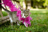 lovely party cat
