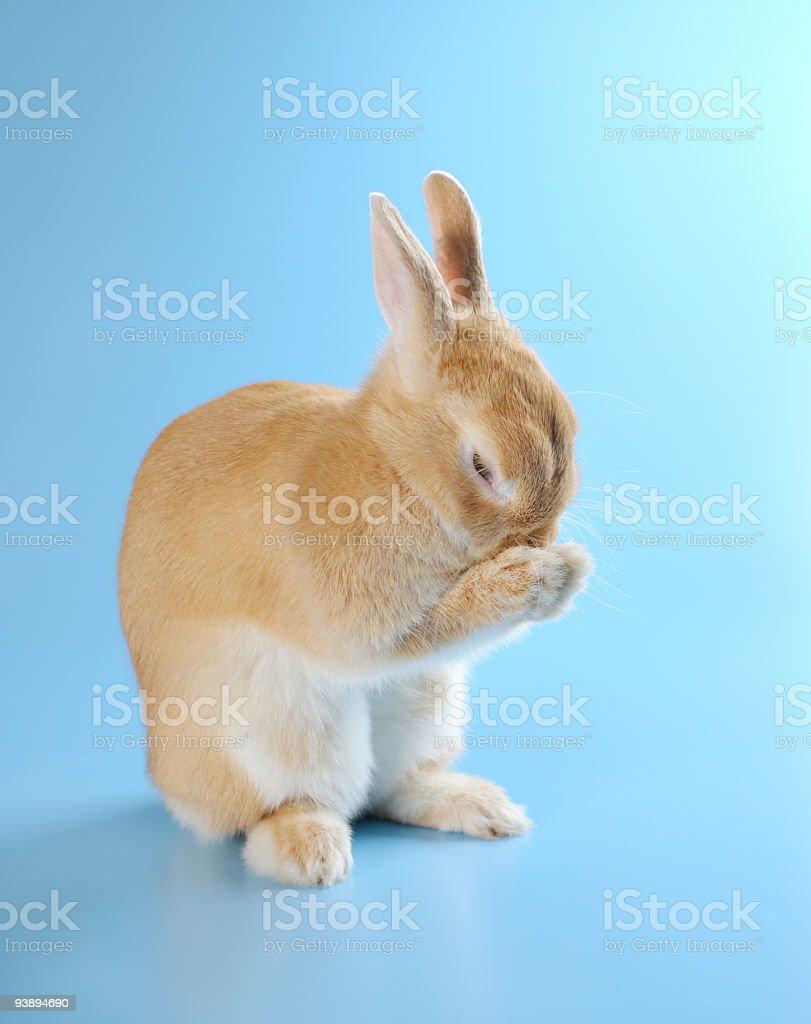 Lovely rabbit stock photo