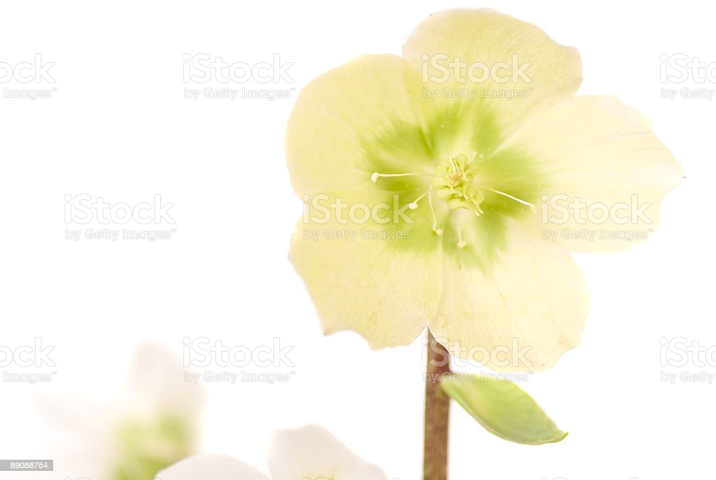 Lovely seasonal flowers stock photo