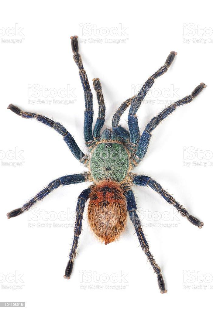 lovely spider stock photo