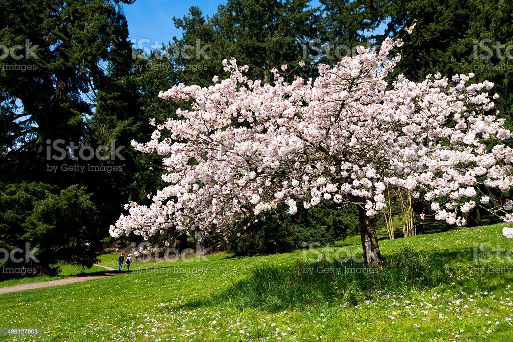 Bella primavera Fioritura foto stock royalty-free