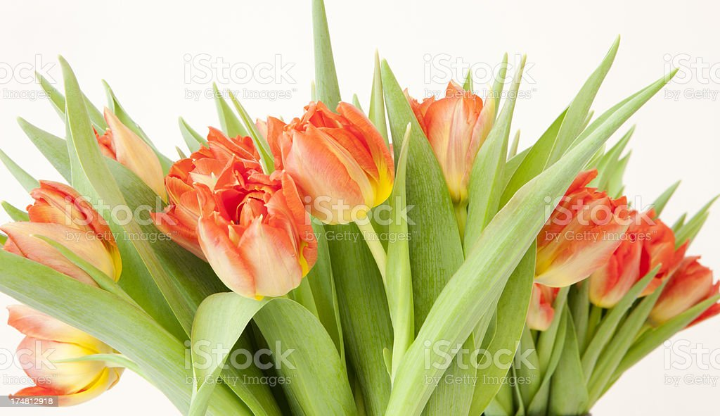 lovely spring colored tulips in a bouquet arrangement royalty-free stock photo