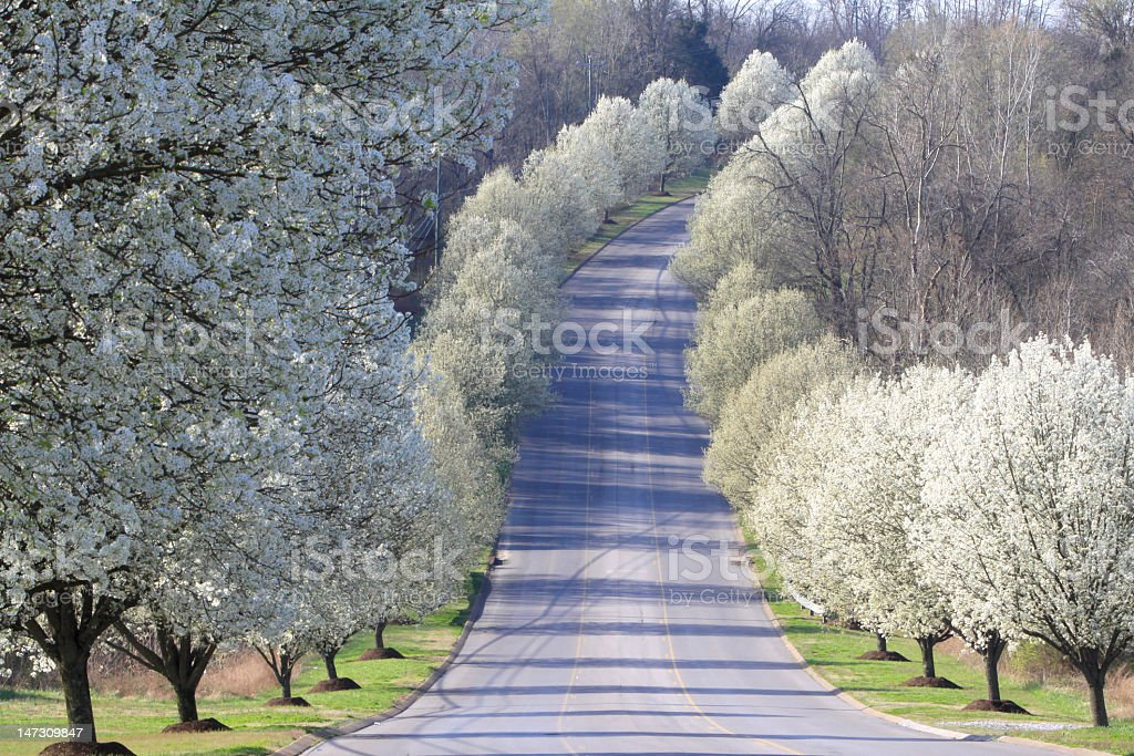 A lovely spring land with fir trees present on both sides stock photo