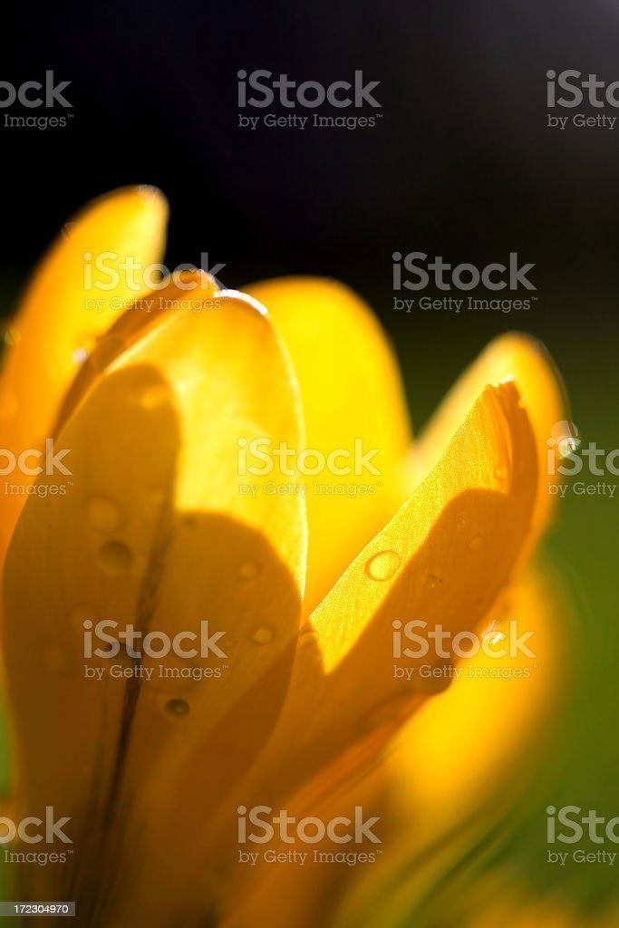 Lovely Spring stock photo