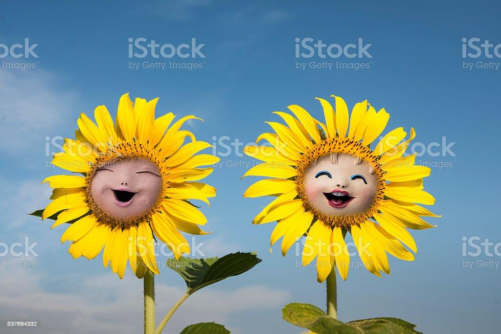 lovely sunflower stock photo