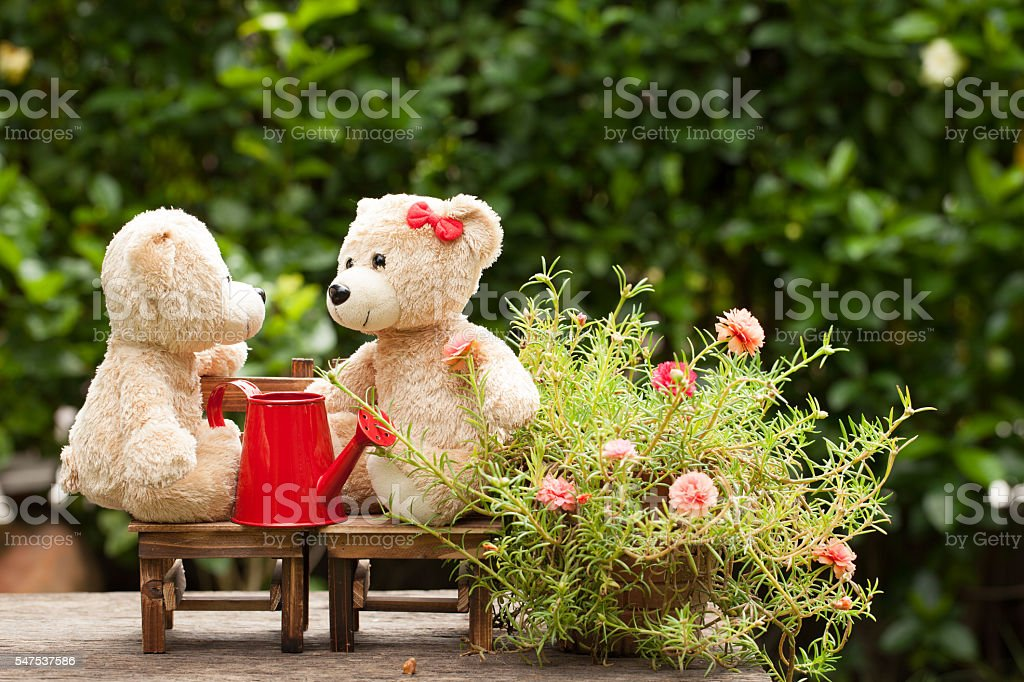 lovely teddy bear and  watering can in the garden stock photo