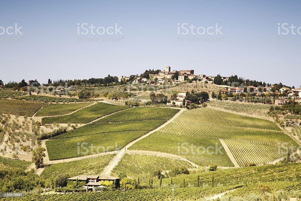 Lovely Tuscany Vineyards at Summer royalty-free stock photo
