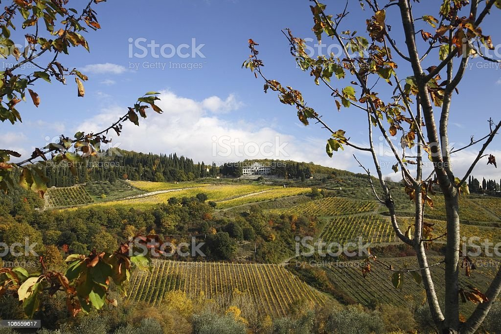 Lovely Vineyards with Palace in Fall stock photo