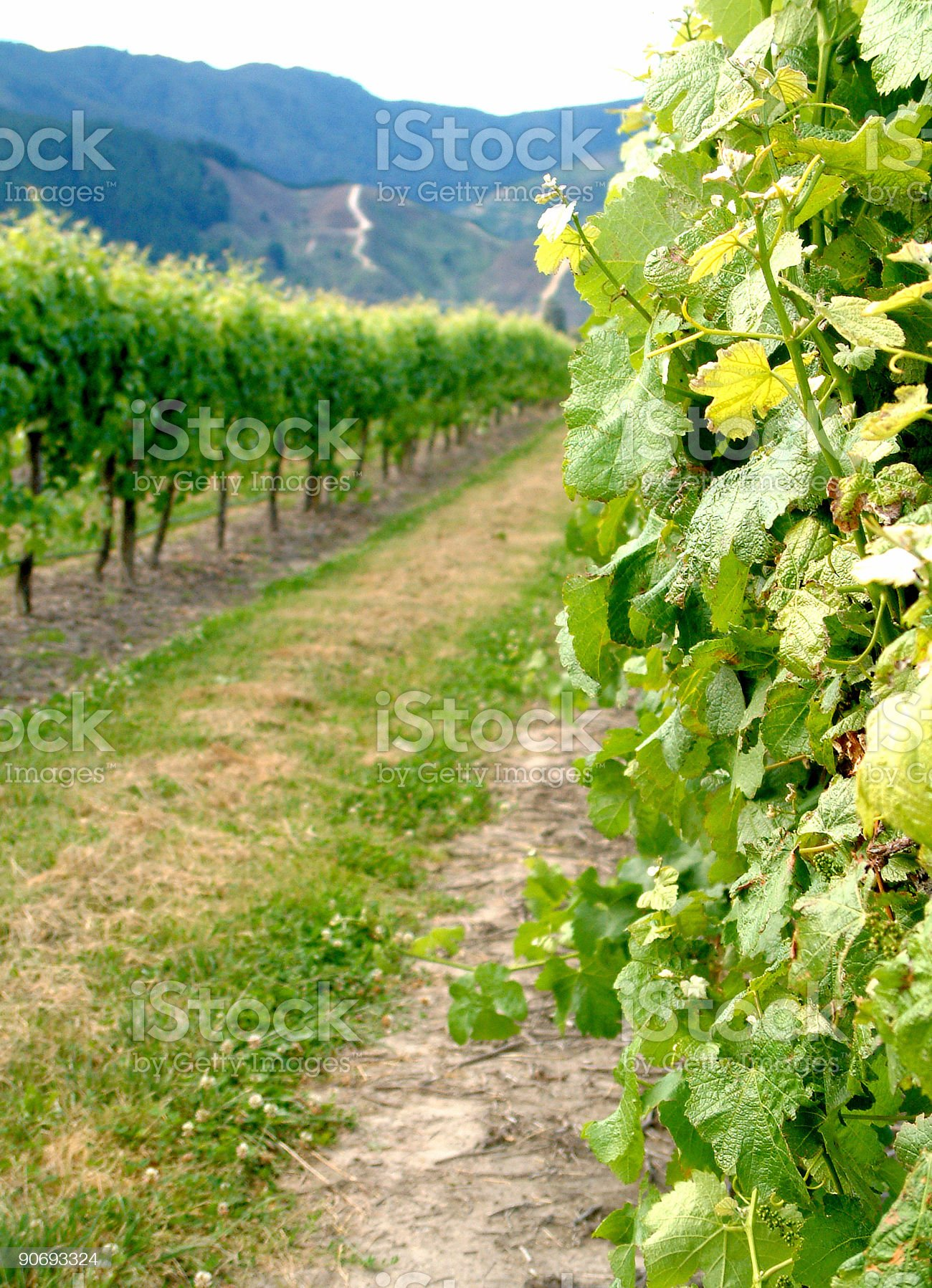 Lovely Winery royalty-free stock photo