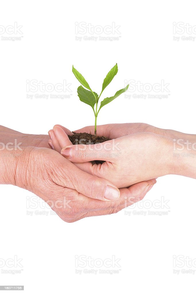 love:plant in mother and daughter's hand isolated on white background royalty-free stock photo